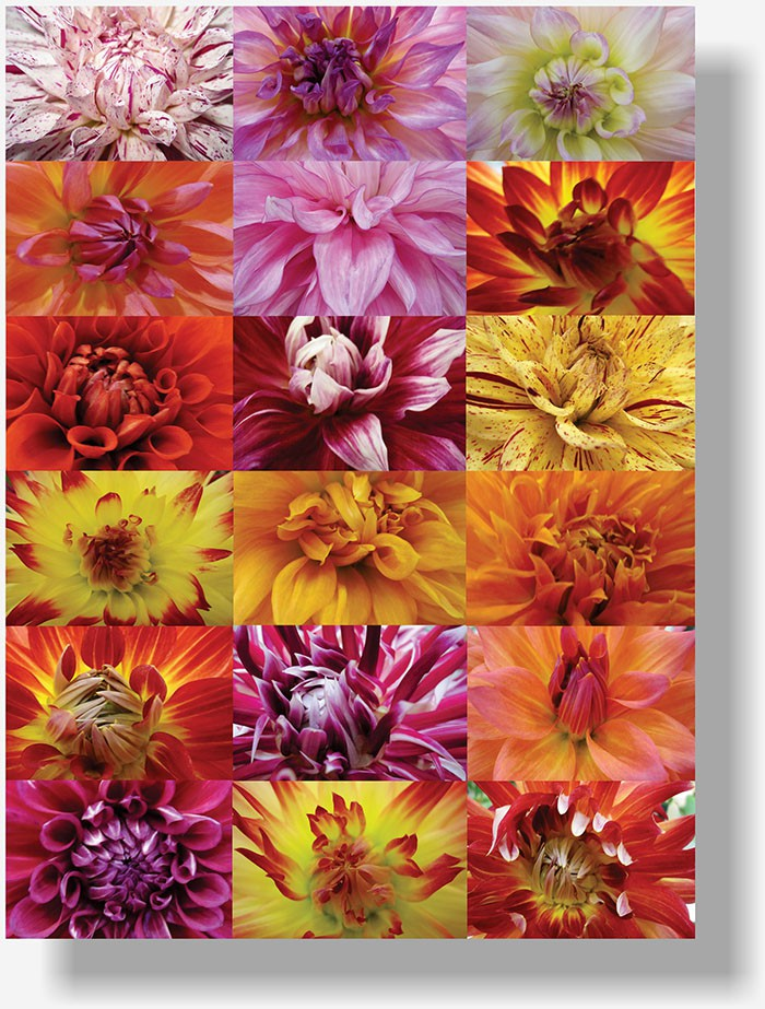 So Cal Nursery Plants poster